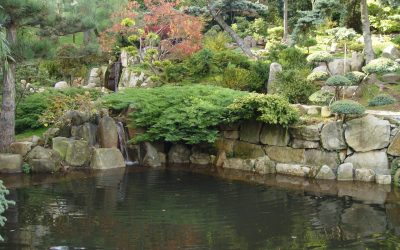 ogród japoński jarków